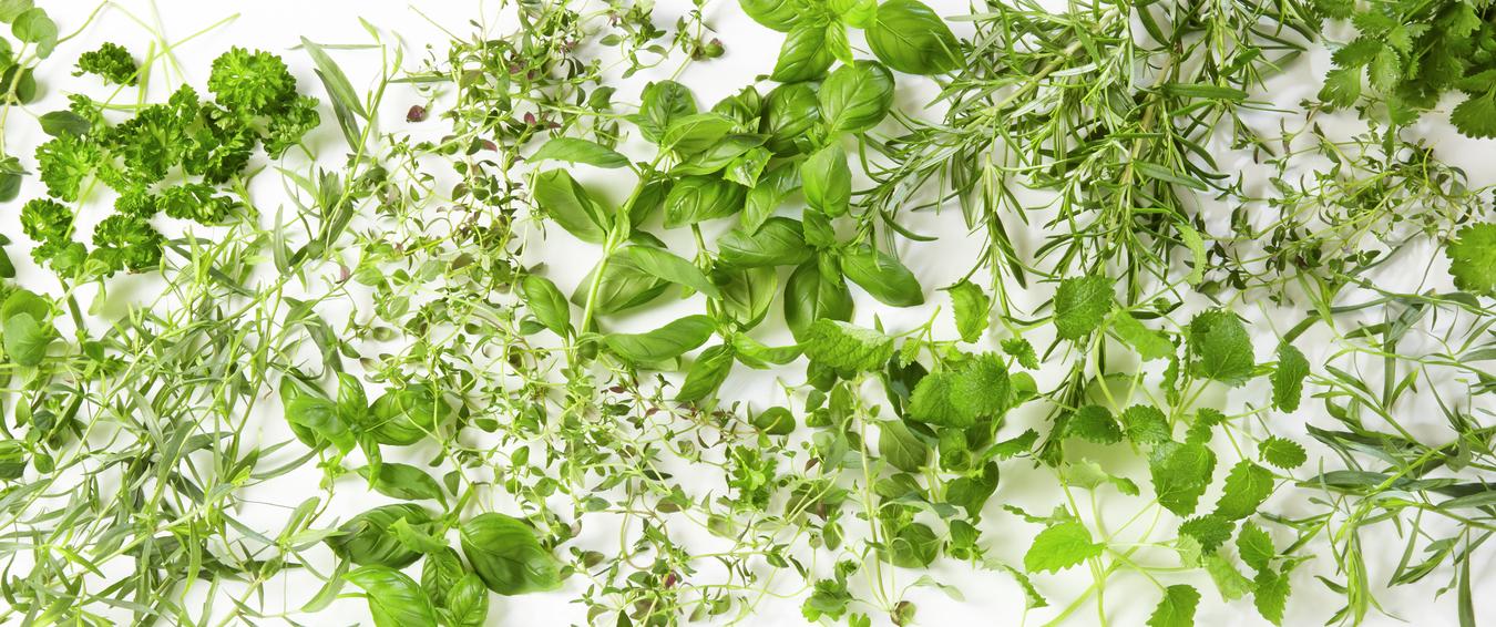 Navn på urter